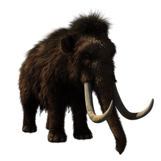 Image of a woolly mammoth
