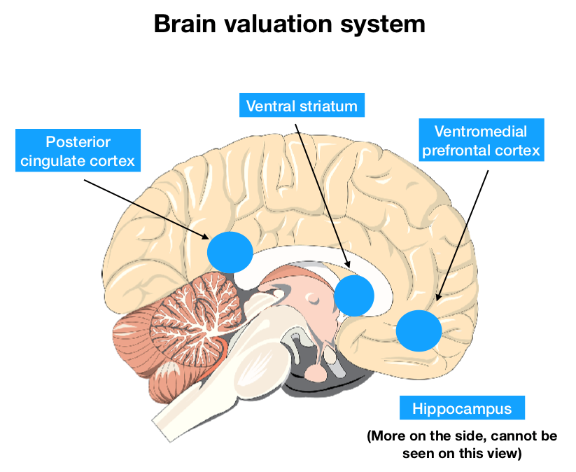 The brain valuation system which includes the Posterior cingulate cortex, the Ventral striatum, Hippocampus and the Ventromedial prefrontal cortex.
