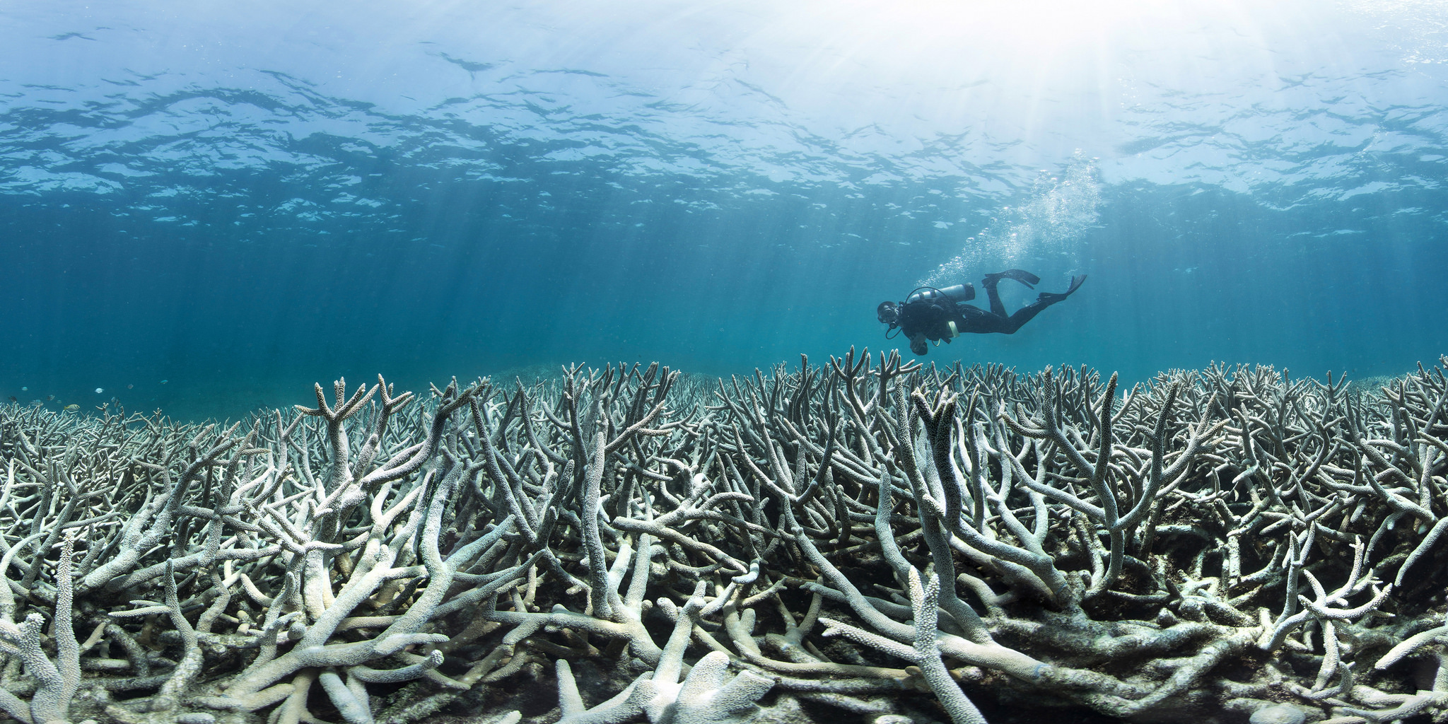 Coral bleaching at Heron Island Feb 2016_credit The Ocean Agency / XL Catlin Seaview Survey / Richard Vevers