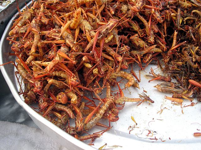 Fried grasshoppers in Bangkok. Image credit: Thomas Schoch, CC-BY-SA