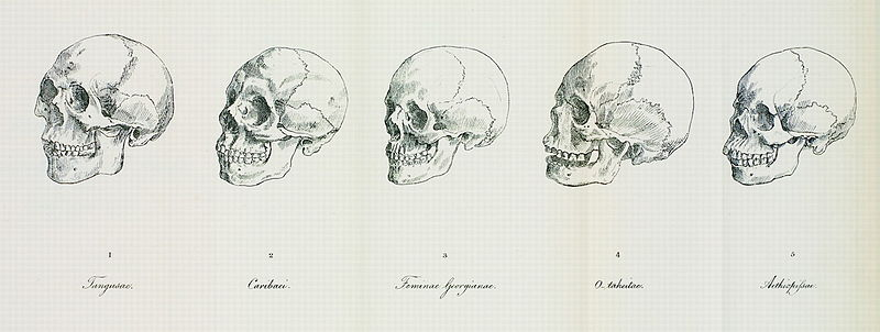 Illustration of Blumenbach's five skulls